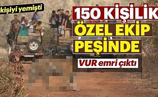 Katil kaplan için 150 kişi yola çıktı