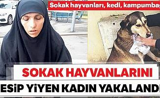 Sokak hayvanlarını kesip yiyen kadın yakalandı!