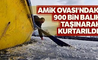 Amik Ovası'ndaki 900 bin balık taşınarak kurtarıldı