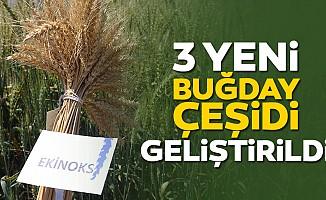 3 Yeni Buğday Çeşidi Geliştirildi