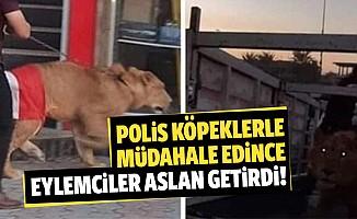 Polis köpeklerle müdahale edince eylemciler aslan getirdi!