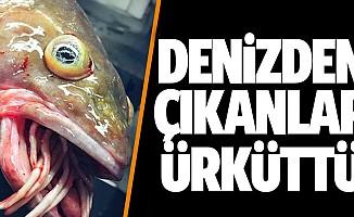 Fenomen balıkçı tuhaf deniz canlıları yakaladı!