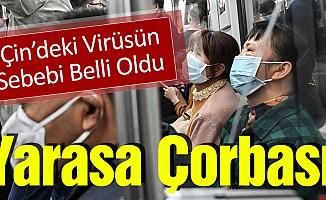 Çin'deki Virüsün Sebebi Belli Oldu