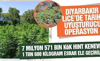 Diyarbakır Lice'de 7 milyon 571 bin kök Hint keneviri ile 1 ton 600 kilogram esrar ele geçirildi