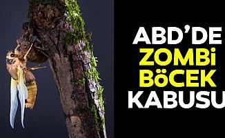 ABD'de zombi ağustos böceği tehlikesi