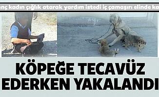 Köpeğe Tecavüz Ederken Yakalandı