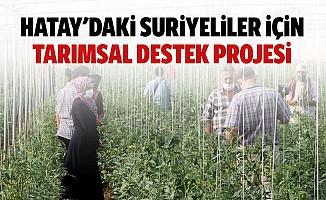 Hatay'daki Suriyeliler için tarımsal destek projesi
