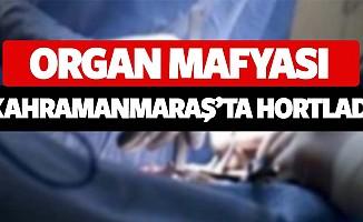 Organ mafyası Kahramanmaraş'ta hortladı