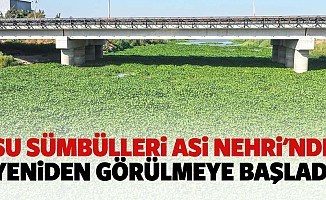 Su sümbülleri Asi nehri'nde yeniden görülmeye başladı