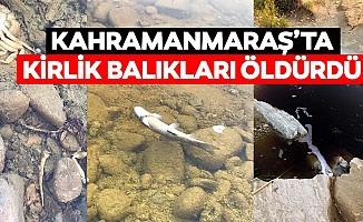 Kahramanmaraş'ta kirlik balıkları öldürdü