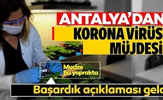 Koronavirüste müjde Antalya'dan geldi!