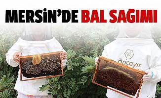 Mersin'de bal sağımı
