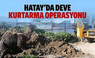 Hatay'da deve kurtarma operasyonu