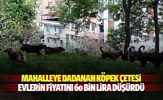 Mahalleye dadanan köpek çetesi evlerin fiyatını 60 bin lira düşürdü