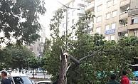 Yaz günü çıkan fırtına ağaçları devirdi, çatıları söktü