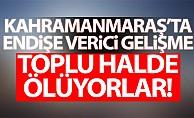 Kahramanmaraş'ta endişe verici gelişme! toplu halde ölüyorlar…