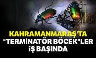 """Kahramanmaraş'ta """"terminatör böcek""""ler iş başında"""