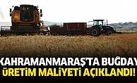 Kahramanmaraş'ta buğday üretim maliyeti açıklandı!