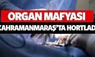 bOrgan mafyası Kahramanmaraşta hortladı/b