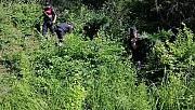 Tekirdağ'da bin 37 kök Hint keneviri ele geçirildi
